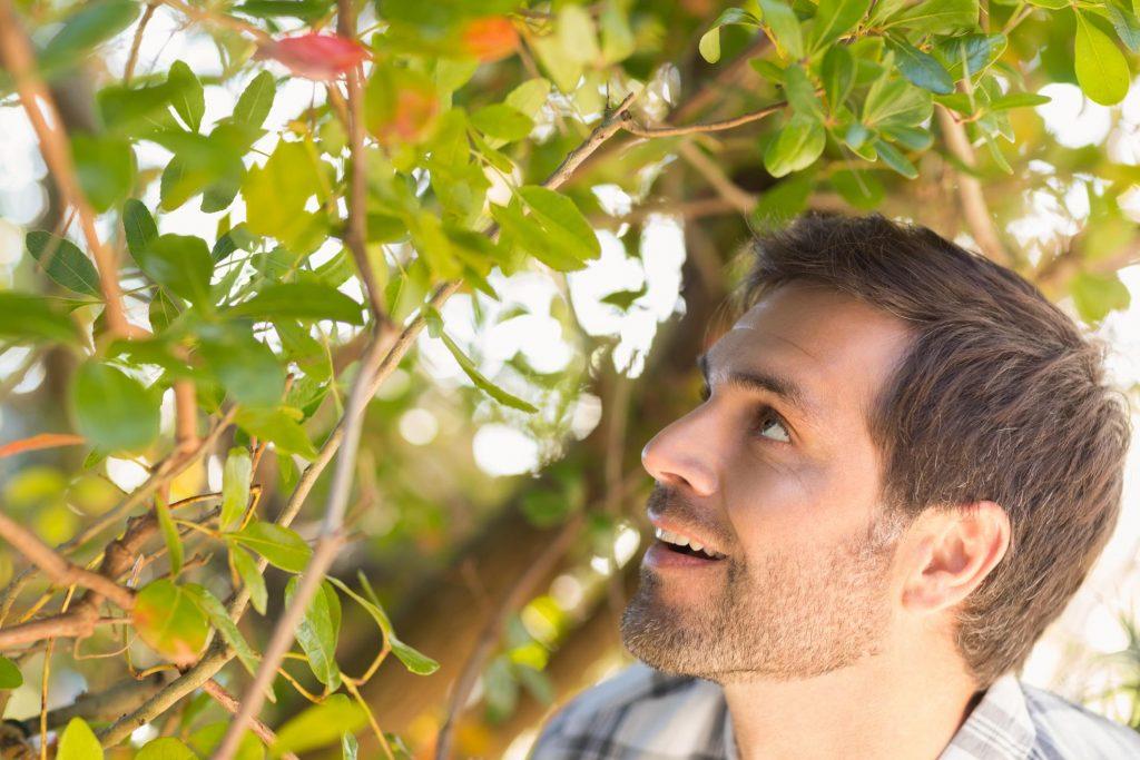 man looking at the tree