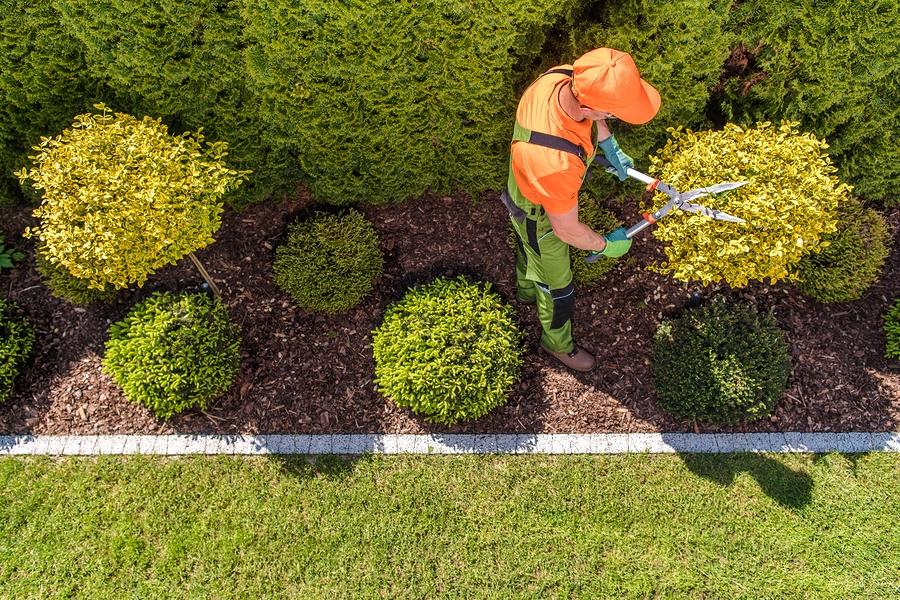 nab trimming the shrubs