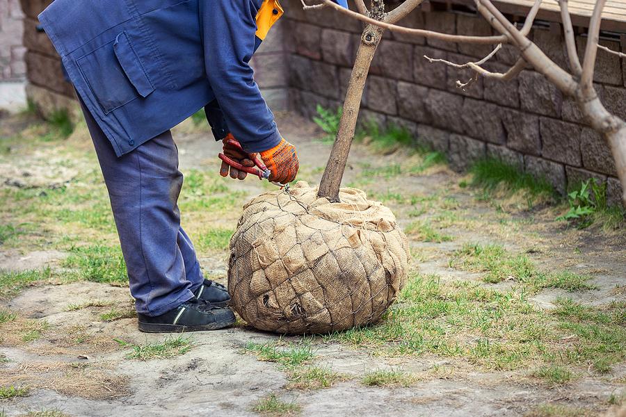 man tying the tree