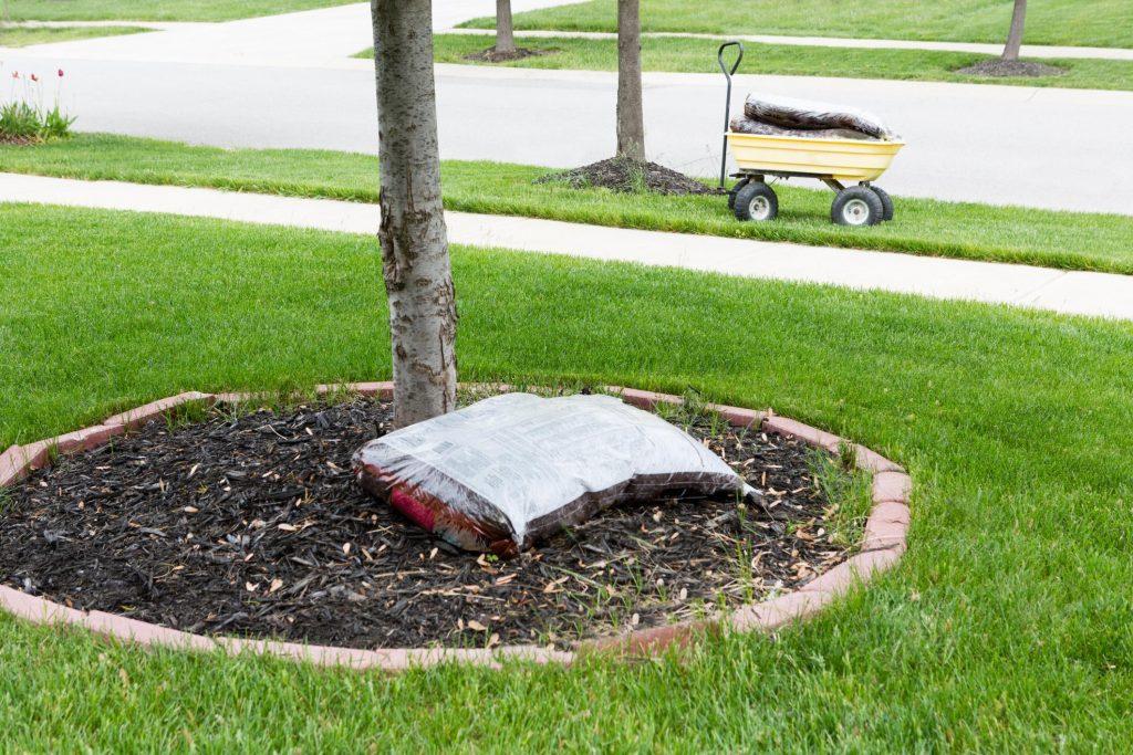 sack beside the tree