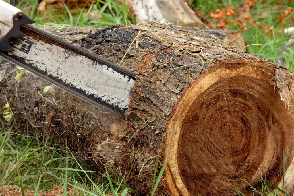 cutting the tree log